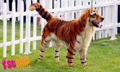 cachorrinhos filhotes fofos - Pesquisa Google