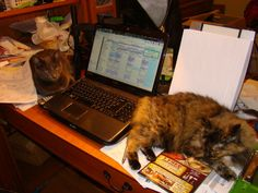 Ann studies with her feline companion! | Where We Study Photo Contest #wherewestudy #studyspaces #onlinelearning