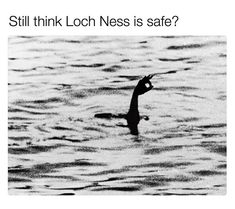 The famous Surgeon's photo of the Loch Ness Monster. The most famous photo of the Loch Ness monster, and it's a fake. Loch Ness Monster, Team Usa, Foto Doodle, Lago Ness, Foto Picture, Fake Photo, Lake Monsters, Funny Jokes, Supernatural