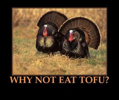 Though native to North America, the wild turkey probably wasn't part of the First Thanksgiving. Read more for your fill of turkey facts. Best Turkey, Turkey Time, Wild Turkey, Tier Wallpaper, Animal Wallpaper, Unique Wallpaper, Turkey Hunting, Deer Hunting, Hunting Tips