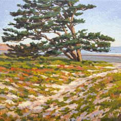 "Carlsbad Cypress - 8.5"" x 8.5"" Oil on Linen. On coast Hwy. 101 between Carlsbad and Encinitas. Cypress Oil, Cypress Trees, Photo Reference, Frame Shop, Limited Edition Prints, Vintage Posters, Art Gallery, Coast, Fine Art"