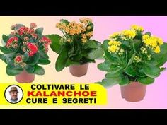 Garden Care, The Cure, Make It Yourself, Youtube, Plants, Pallet, Gardening, Landscaping, Lawn And Garden