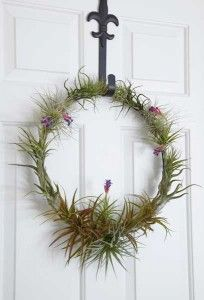 Amazing Tillandsia wreath