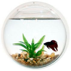 How To Decorate Fish Bowl Waterscapes_Fishbowls_1  Aproduct I Love  Pinterest  Fishbowl