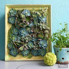 シャルトルーズイエローの額縁は多肉植物の黄緑色にとても似合っています。大きさや形の異なる多肉植物を組み合わせ、グラデーションを考えた植え方が素晴らしいですね。