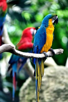 Awww everyone loves a macaw!