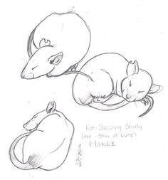 doodles of my rat on scrap paper done while he was sleeping. this is the various positions of our ball of cute. ^_^
