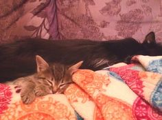 #sweet's #cats