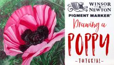 Winsor & Newton Pigment Markers - Drawing a Poppy Flower tutorial