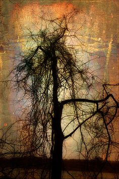 'Halloween Tree' by Amy Neufeld Amazing Photos, Cool Photos, Halloween Trees, Tree Silhouette, Pictures Of You, Cool Art, Amy, Spaces, Friends