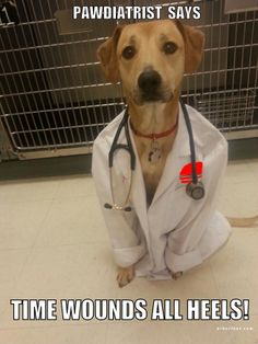 Straight from the pawdiatrist himself. Make your appointment today.