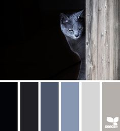 cat tones - never been much of a blue person, but really like these.  Not sure if it is really the colors or the cat picture though
