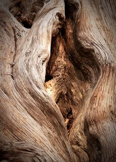 Photo of a tree? Wood Texture, Texture Art, Natural Texture, Patterns In Nature, Textures Patterns, Theme Nature, Mushroom Pictures, Photoshop Rendering, Tree Faces