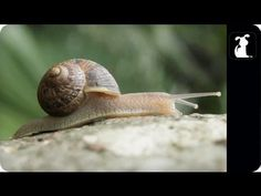 "Snail, A Parody Music Video of the Song ""Sail"" by Awolnation"