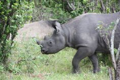 Tanzania Wildlife.  欢迎在坦桑尼亚 Travel Tours, Air Travel, Hippopotamus, Safari, World, Videos, Animals, Airline Travel, The World