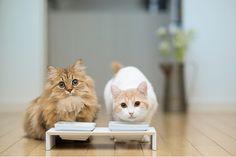 #cats #milk