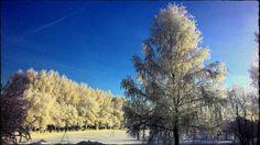 Белая берёза под моим окном принакрылась снегом, точно серебром...