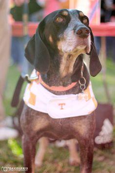 Smokey. Tennessee Vols!