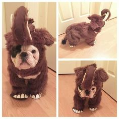 'MANNY', the French Bulldog, in an Elephant Costume, ❤❤❤❤