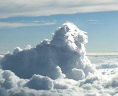 Ich bin Gottes Löwe, nicht der Löwe der Leidenschaft .... Ich habe keine Sehnsucht außer nach dem Einen. Wenn ein Wind persönlicher Reaktion kommt, gehe ich nicht mit. Rumi