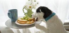 Había una vez un perrito malamañoso llamado Floffy:...