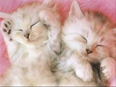 Kittens Cutest, Cats And Kittens, Cat Noises, Beloved Quotes, Fat Cats, Fur Babies, Cute Animals, Funny, Dogs