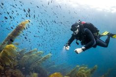 Does Anyone Actually Go Diving With a Dice Watch?