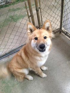 6/2016 sl*6/2015*♥♥♥♥*Roxanne is a young female German Shepherd dog mix. She is very lovable but very afraid of other animals so will need to be an only dog, She is available for adoption at Capital Area Animal Welfare Society, Baton Rouge,La.