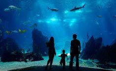 Virginia Beach Aquarium, VA