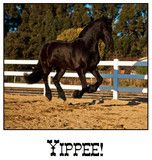 """Yippee! These unique horse note cards are sure to suit any occasion. 5 1/2"""" x 4 1/4"""" card with matching envelope sealed in plastic. Blank inside."""
