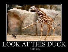 Look At This Duck #Duck, #Look, #This
