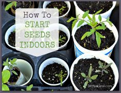 How To Start Seeds indoor / http://www.diynatural.com/how-to-start-seeds/