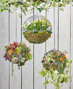 Planters Instantly add pop to your garden with these Hanging Sphere Planters Fill them with flowers greenery succulents and more to give them a lush appearance PlaceInsta. Succulent Gardening, Succulents Garden, Organic Gardening, Lawn And Garden, Garden Art, Outdoor Plants, Outdoor Gardens, Hanging Planters, Hanging Flowers