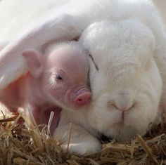 Makes me smile :-) #pets #animals #pig #rabbit