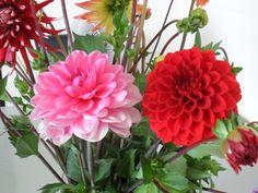 Rood / Rose van de Kwekerij Achter de Hove Leeuwarden 2014