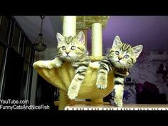 Funny Cats watching Women's tennis | Too Cute Kittens -  #animals #animal #pet #cat #cats #cute #pets #animales #tagsforlikes #catlover #funnycats Subscribe:  . Funny Cats watching Women's tennis  | Too Cute Kittens Watch new video every Tuesday ! Watch also: Mom Cat Talking to her Cute Meowing Kittens  20 min BONUS Video Funny Cats Choir |... - #Cats