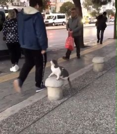 Funny Cute Cats, Cute Baby Cats, Cute Little Animals, Cute Funny Animals, Kittens Cutest, Cute Animal Videos, Funny Animal Pictures, Gato Gif, Photo Chat