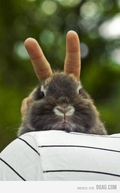 Bunnies don't get why this joke is so funny.