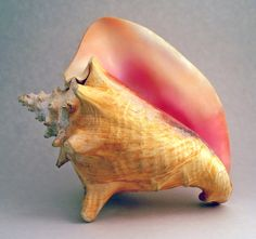 Broken Conch Lord Of The Flies