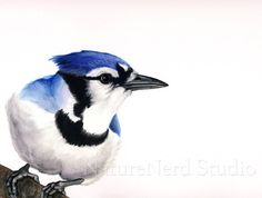 Blue Jay Portrait of a Tattle-Tale Watercolor by NatureNerdStudio Blue Jay, Watercolor Bird, Watercolor Ideas, Tattle Tale, Bird Art, Beautiful Birds, Blue Bird, Painting & Drawing, Outdoor Painting
