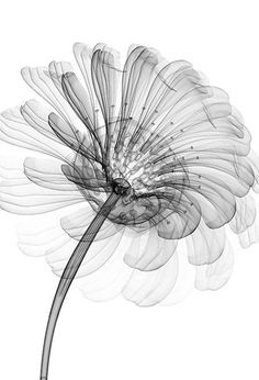inorganic flower RADIOGRAPHX-RAY PHOTOGRAPHY / X-RAY ART More At FOSTERGINGER @ Pinterest