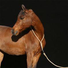Der Sattel ist der wichtigste Ausrüstungsgegenstand für Pferd und Reiter. Pferdebesitzer sollten deshalb die grundlegenden Passformregeln kennen und in der Lage sein, diese in der Praxis zu überprüfen. Mit diesem Buch lernen Interessierte, die Sattelpassform selber einzuschätzen.