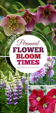 Flowering perennial bloom times through the seasons. The Effective Pictures We Offer You About landscaping Perennials A quali. gifts gifts for best friends gifts for boyfriend gifts for girlfriend blooming Perennials maintenance Perennials full sun Beautiful Flowers Garden, Love Flowers, Fresh Flowers, Growing Flowers, Planting Flowers, Flower Gardening, Fairy Gardening, Growing Plants, Flower Garden Design