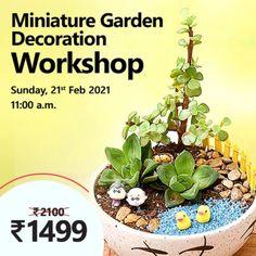 Jade Plants, Fruit Plants, Flowering Plants, Save Mother Earth, Garden Posts, Planting Roses, Terrace Garden, Green Rose, Garden Accessories