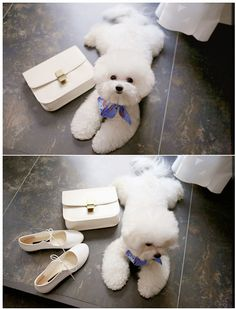 string brogues by only b- this dog is too cute