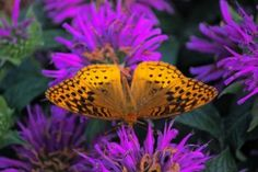 Watching Butterflies: Watching butterflies is a delight at any age, but finding them can be a challenge. Get tips to make butterfly watching easy and fun. birdsandblooms.com