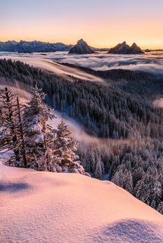 """The Art of Fog - <a href=""""http://workshops.naturwaerts.ch"""">WORKSHOPS SWITZERLAND</a> <a href=""""https://www.facebook.com/tobiasryser.fotografie%0A"""">FACEBOOK</a> <a href=""""https://www.instagram.com/tobias_ryser_fotografie/"""">INSTAGRAM</a> Please feel free to follow me on FB or Insta or join a Adenture Workshop in Switzerland. This image I was able to capture last winter, when I had really nice winter conditions in the central Swiss Alps."""