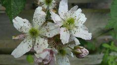 Ik geniet met volle teugen van alle mooie bloemen in de tuin #stadstuin Plants, Blog, Blogging, Plant, Planets