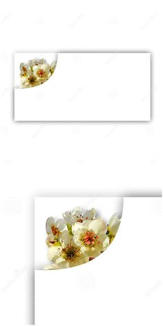 Photo about White spring flowers placed at the corner of a rectangular shape with shadow. Useful for invitation or greeting cards. Image of blossom, abstract, feminine - 178600651 Flower Places, Text Frame, White Springs, Spring Flowers, Beautiful Flowers, Greeting Cards, Corner, Shapes, Invitations