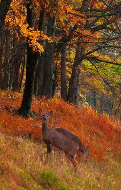 Deer--great photo